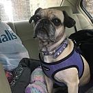 Adopt A Pet :: Ivy