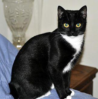 Adopt A Pet :: Elle  - Liberty, NC