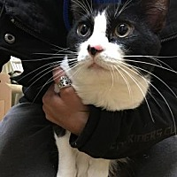 Adopt A Pet :: Ted - Chicago Heights, IL