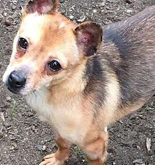 Adopt A Pet :: Lois  - Renton, WA