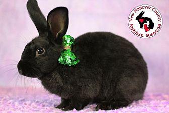 Adopt A Pet :: Jafar  - Wilmington, NC