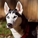 Adopt A Pet :: Snowy