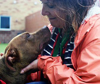 Adopt A Pet :: Mary Anne  - Troy, MI