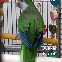 Adopt A Pet :: Howie - Villa Park, IL
