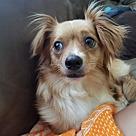 Adopt A Pet :: Vulptex