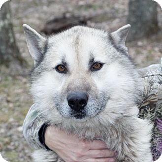 Dogs For Adoption In Wv