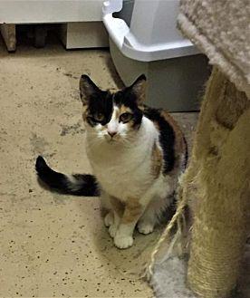 Adopt A Pet :: Nanny  - Blasdell, NY