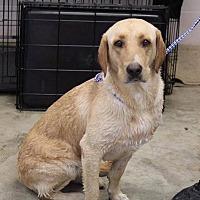Adopt A Pet :: Kynlee - Jay, NY