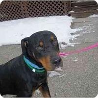 Adopt A Pet :: Leo - Milwaukee, WI