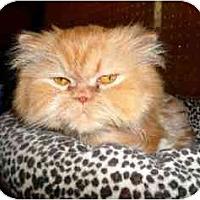 Adopt A Pet :: McGee - Strathmore, AB