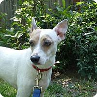Adopt A Pet :: Patches - Sacramento, CA