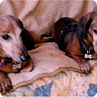 Adopt A Pet :: Max - Tucson, AZ