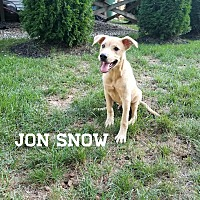 Adopt A Pet :: Jon - Southington, CT