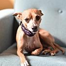 Adopt A Pet :: Tony Danza
