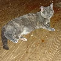 Adopt A Pet :: Princess - Baltimore, MD