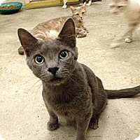 Adopt A Pet :: Wraith - St. James City, FL