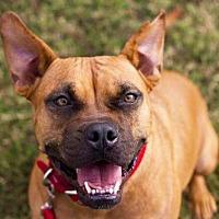 Adopt A Pet :: Ginger - Tanner, AL
