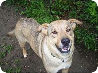 Dog Adoption Antioch Il