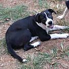 Adopt A Pet :: River