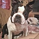 Adopt A Pet :: DeeDee