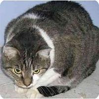 Adopt A Pet :: Hope - Strathmore, AB
