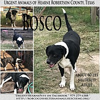 Adopt A Pet :: Bosco - Hearne, TX