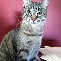 Adopt A Pet :: Tiki - Cranford, NJ