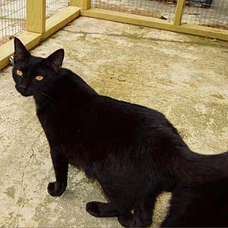 Adopt A Pet :: Iris  - Lucedale, MS