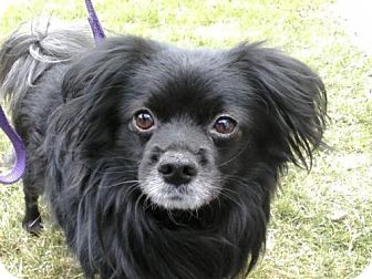 Dog Adoption Toronto Ontario