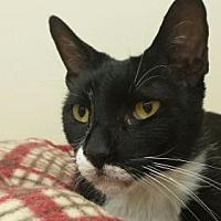 Adopt A Pet :: LONNIE - Smithtown, NY