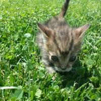 Adopt A Pet :: Itty Bitty - New Freedom, PA