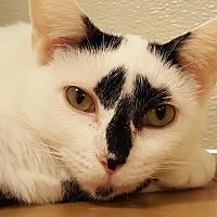 Adopt A Pet :: Pasta - Grayslake, IL