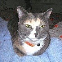 Adopt A Pet :: Mary Jane - Midvale, UT