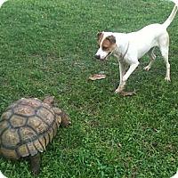 Adopt A Pet :: Loki - miami beach, FL