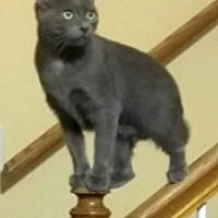 Adopt A Pet :: Lil Bit - Chattanooga, TN