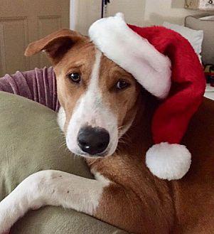 Adopt A Pet :: Puppy Love...  - Ft Myers Beach, FL