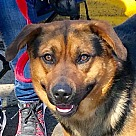Adopt A Pet :: Marshall *Adopttion Pending*