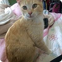 Adopt A Pet :: Penny - Ogallala, NE