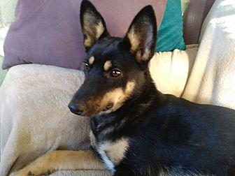 Adopt A Pet :: Tessa  - Albuquerque, NM