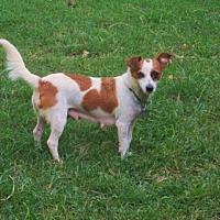 Adopt A Pet :: LUNA - Lincolndale, NY