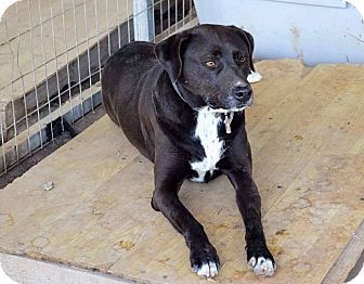 Adopting Two Male Dogs Close In Age