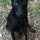 Adopt A Pet :: Pup Jameson