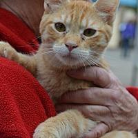 Adopt A Pet :: Morris - Vacaville, CA