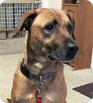 Grand Rapids Mi Labrador Retriever Meet Lenny A Pet For Adoption