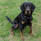 Adopt A Pet :: ranger