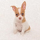 Adopt A Pet :: Adorable Nacho- No Longer Accepting Applications!
