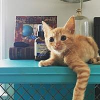 Adopt A Pet :: Clay - Los Angeles, CA