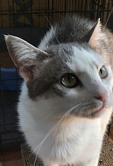 Adopt A Pet :: Emma  - Devon, PA