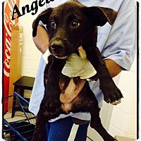 Adopt A Pet :: Angela - Tampa, FL