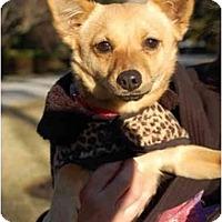 Adopt A Pet :: DEEDEE DAFFODIL - Houston, TX